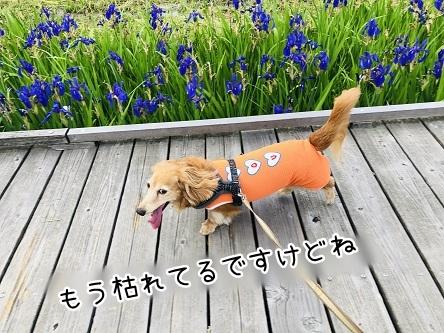 kinako11984.jpeg