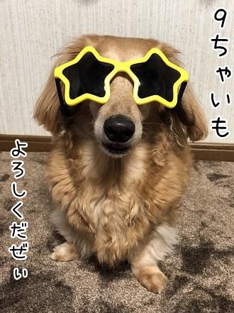 kinako11996.jpeg