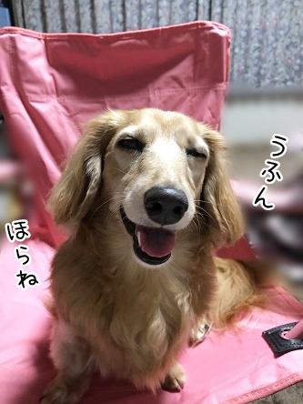 kinako12056.jpeg