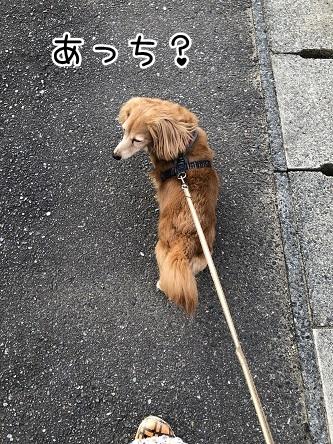 kinako12058.jpeg