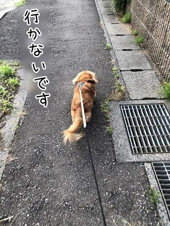 kinako12059.jpeg