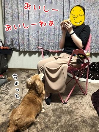 kinako12063.jpeg
