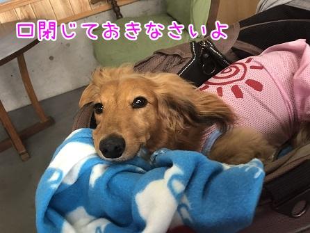 kinako12073.jpeg
