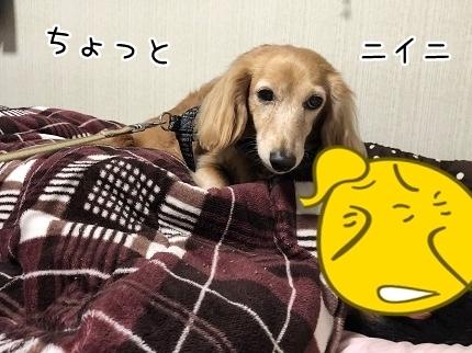 kinako12085.jpeg