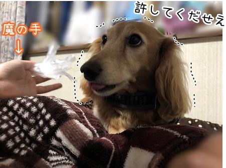 kinako12092.jpeg