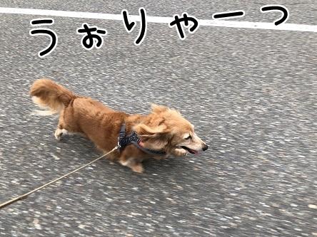 kinako12105.jpeg