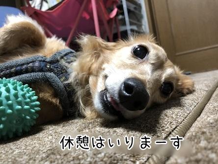 kinako12114.jpeg