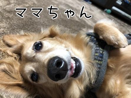 kinako12119.jpeg