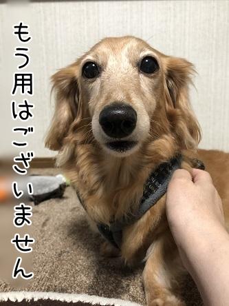 kinako12145.jpeg