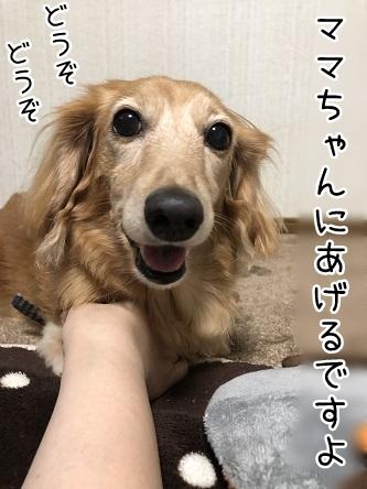 kinako12146.jpeg