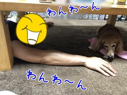 kinako12162.jpeg