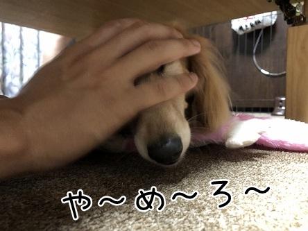 kinako12164.jpeg