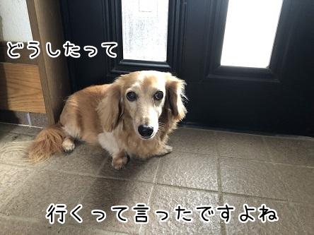 kinako12169.jpeg
