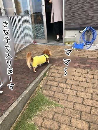 kinako17177.jpeg