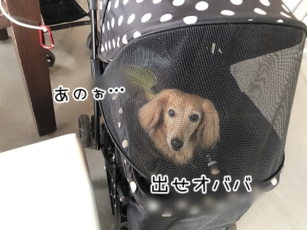 kinako17181.jpeg