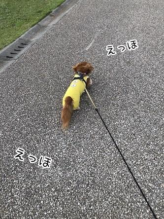 kinako17186.jpeg
