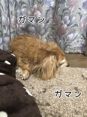 kinako17213.jpeg