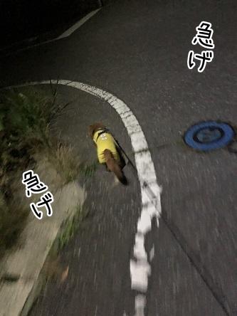 kinako17216.jpeg