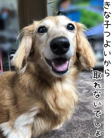 kinako17231.jpeg