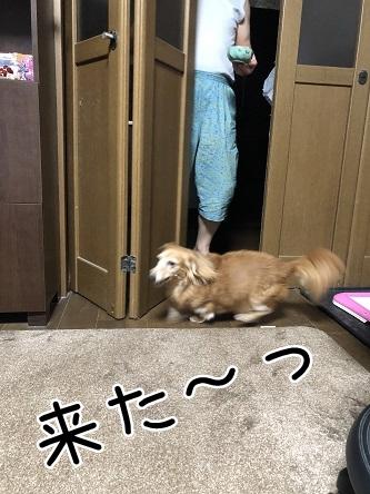 kinako17235.jpeg