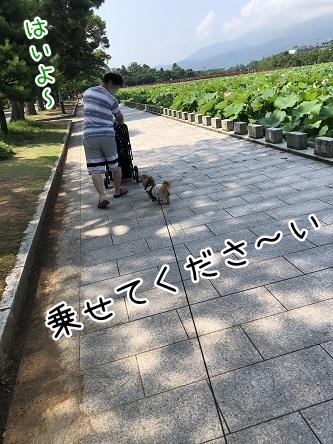 kinako17259.jpeg
