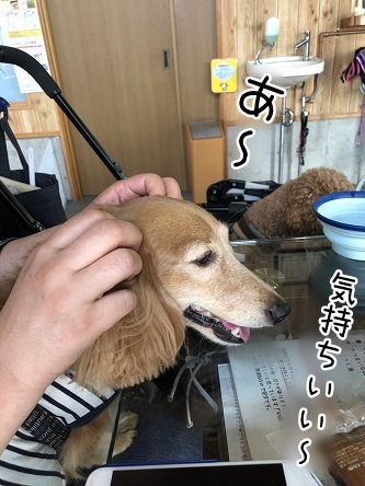 kinako17263.jpeg