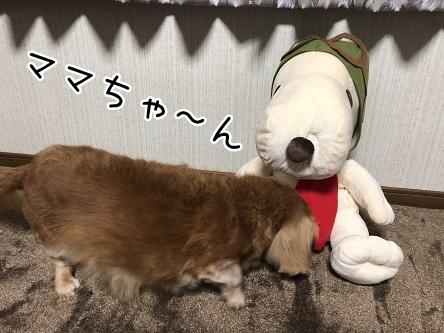 kinako17271.jpeg