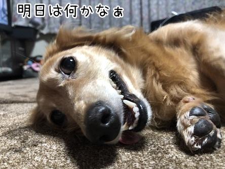 kinako17278.jpeg