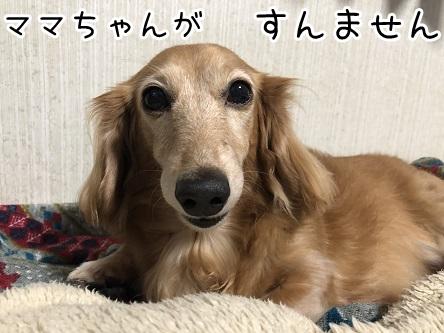 kinako17321.jpeg