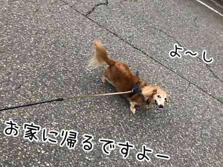 kinako17336.jpeg