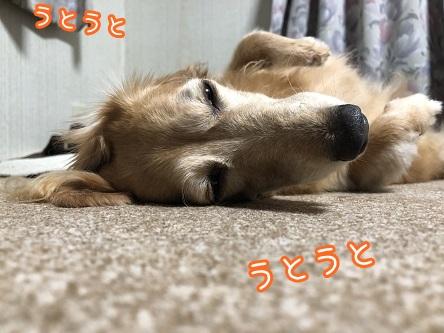kinako17368.jpeg