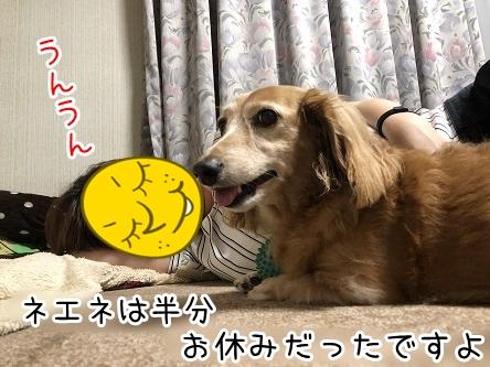 kinako17387.jpeg