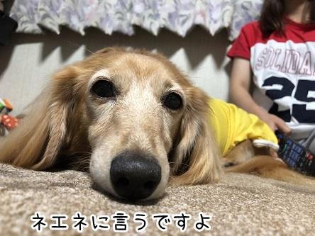 kinako17430.jpeg