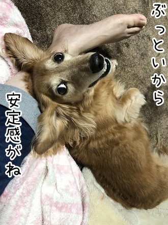 kinako17435.jpeg