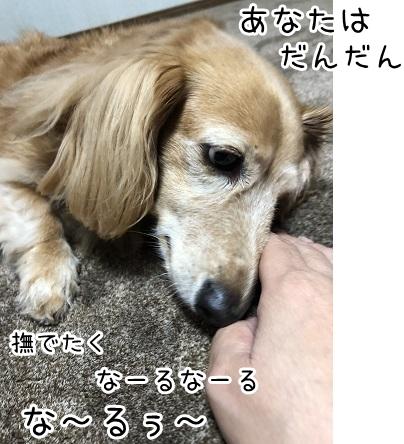 kinako17440.jpeg