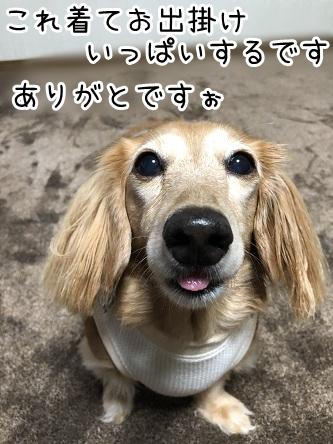 kinako17514.jpeg