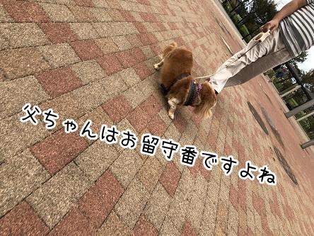 kinako17525.jpeg