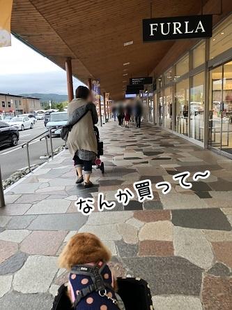 kinako17531.jpeg