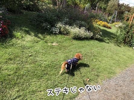 kinako17534.jpeg
