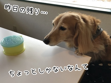 kinako17539.jpeg
