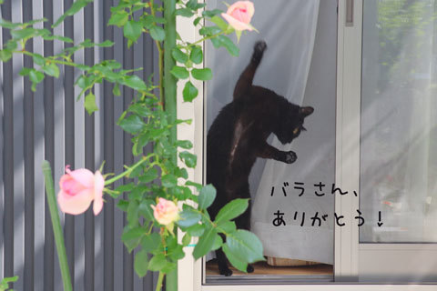 IMG_8491.jpg