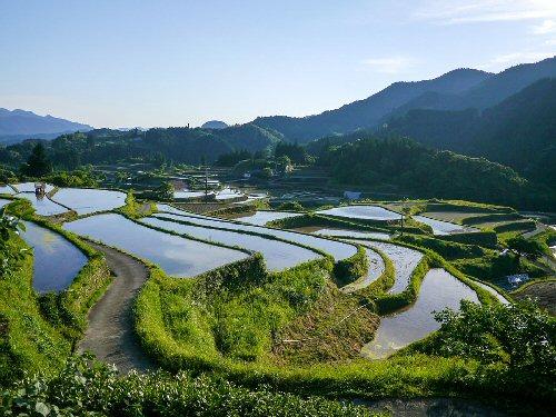 01c 500 terraced rice field