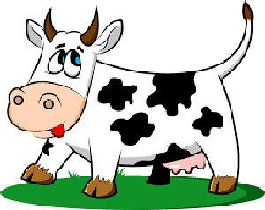 02a 300 cute cow