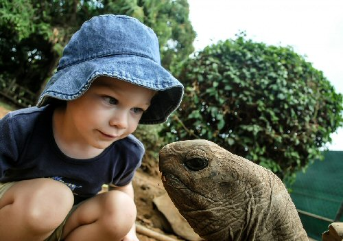 04c 500 a boy and a turtle