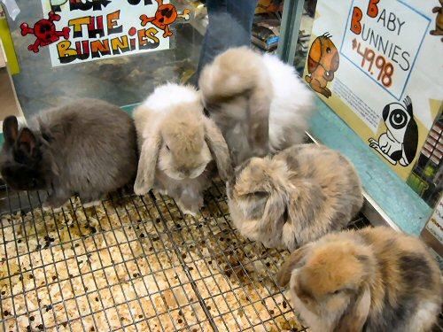 09b 500 bunnies