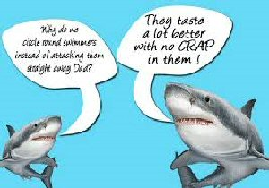 03a 300 sharks