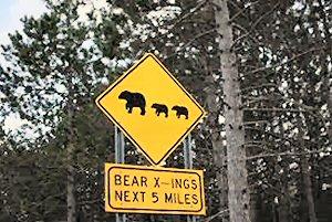 08a 300 bear x-ing