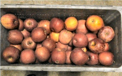 01b 500 a box of many apples