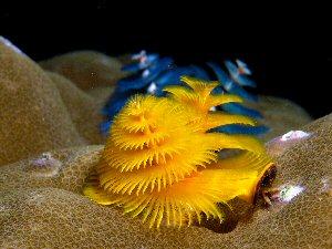 04cb 300 Xmas worms in the sea