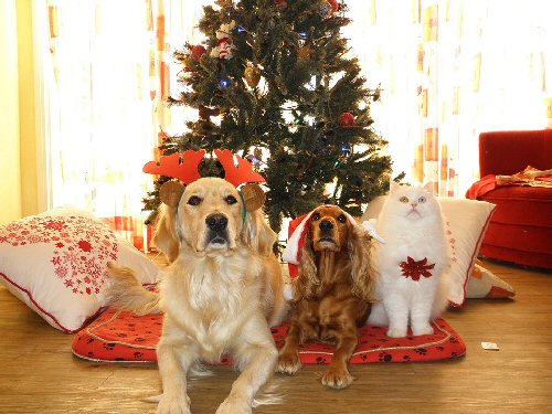 03b 500 cats and dogs Xmas